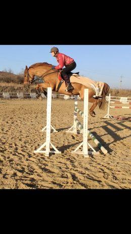 Конкурный конь, жеребец, лошадь, бесплатная Доставка!
