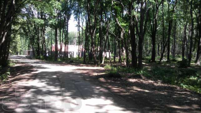Продам (обмен) участок под застройку в лесу
