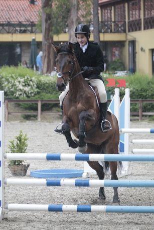 Cavalos para competição