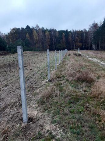 Ogrodzenie z siatki leśnej słupki betonowe NAJTANIEJ