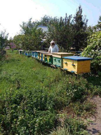 Продам пчелы,  ульи!