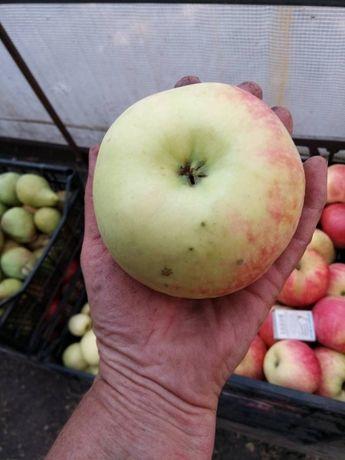 Яблука яблоки груши зимние фрукты соки сад разные сорта