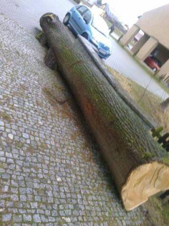 Drzewo lipowe do rzeźbienia