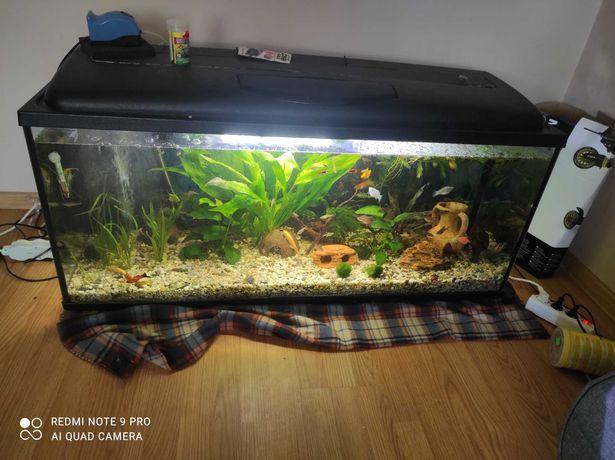 Akwarium 240l z pokrywa