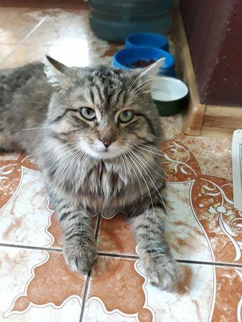 Перетримка для котиків на час Вашої відпустки