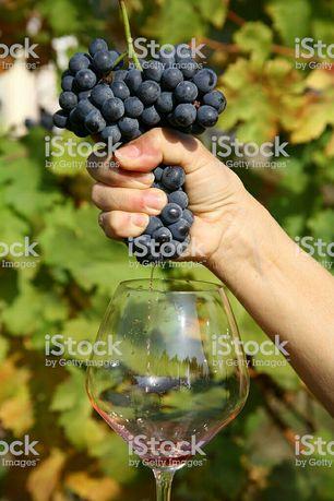 Продам виноградний сок