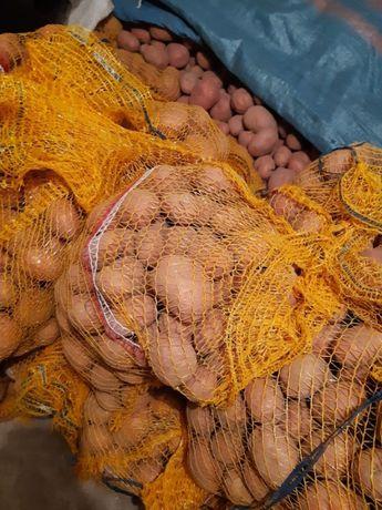 Sprzedam ziemniaki z małej uprawy z dowozem