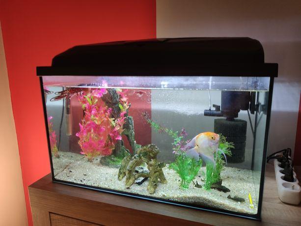 Akwarium kompletny zestaw