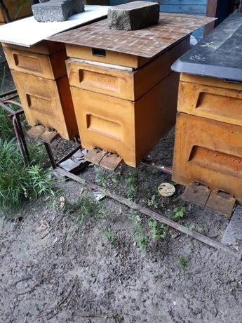 Sprzedam pszczoły odkłady 6 i 10  ramkowe