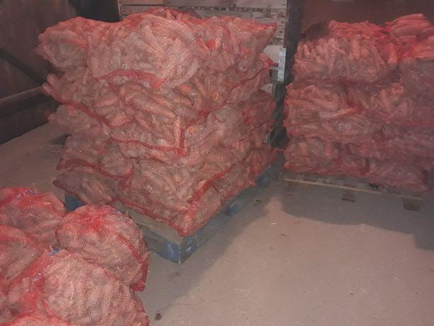 Marchew odpadowa brudna 10zł za 20 kg worek