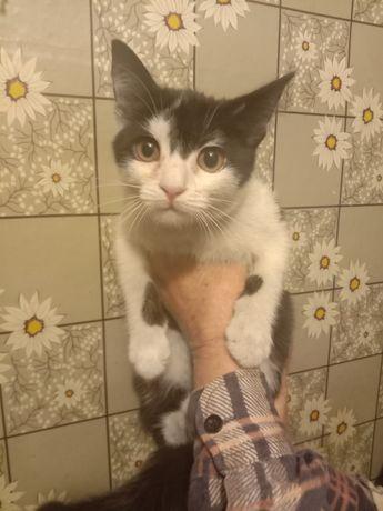 Милый котенок в хорошие руки бесплатно. Отдам котят даром. Срочно!