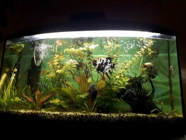 Akwarium 112l profil zestaw pokrywa aquael