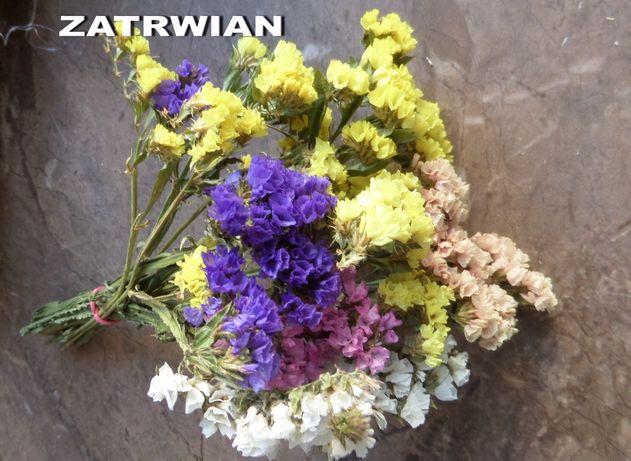 Susz kwiaty zatwian suszony złociszek krwawnik zatrwian Żychlin żółty