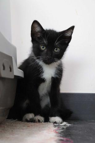 URGENTE! Dou gatinho com 2 meses Aveiro