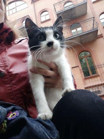 "Пропала кошка в районе д/к ""Зелені луки"" (Осокорки). Помогите найти!!!"
