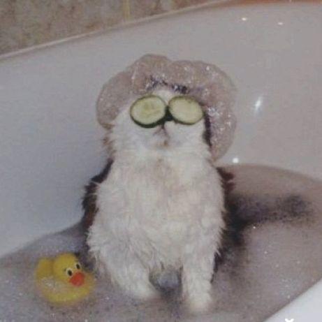 Передержка для котов и кошек м. Политех