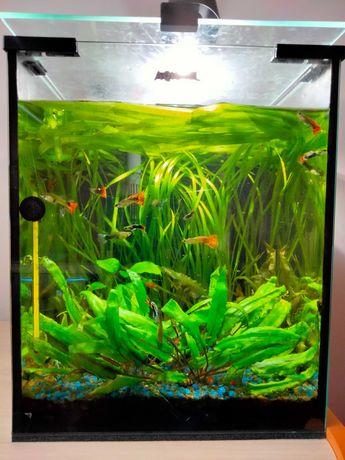 Akwarium 30l Aquael komplet