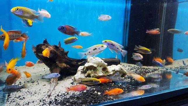 Rybki Akwariowe - różne gatunki Polecam