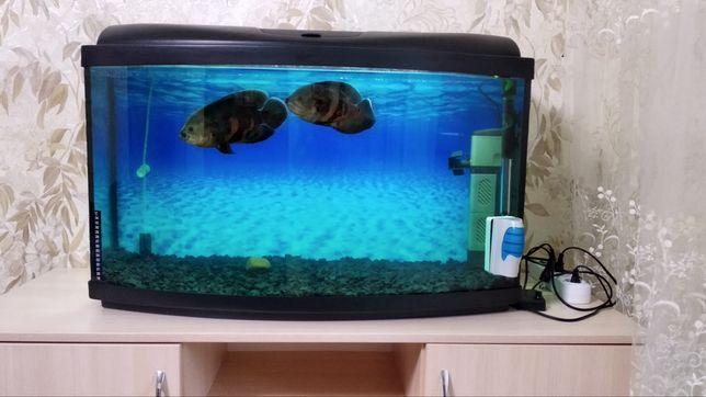 Срочно продам аквариум на 110л.