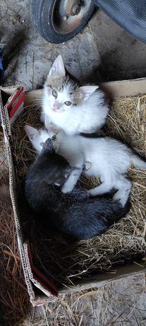 Kociaki do oddania