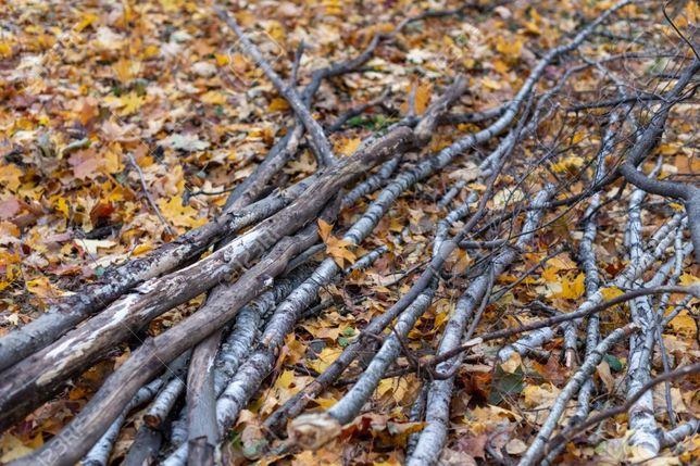 Gałezie z drzew liściastych