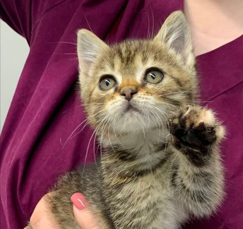 Кошеня дівчинка у хороші руки