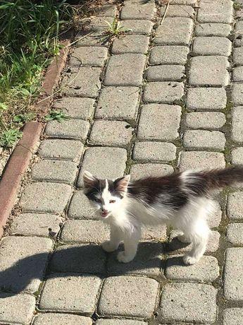 Котик кішка кошеня в добрі руки 2 місяці