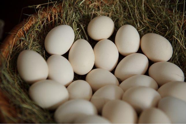 Jaja wiejskie zielononóżki
