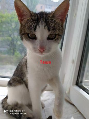 Таша - стерилизованная юная кошечка