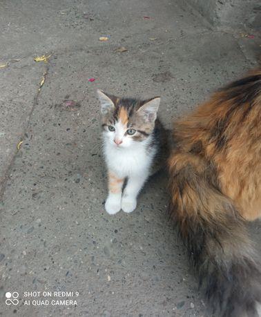 Oddam kotki na zdjęciu