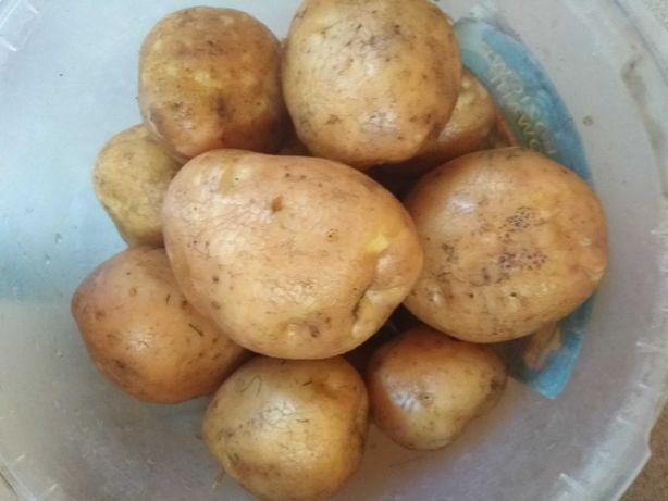 Sprzedam ziemniaki Bellarosa i Ranomi