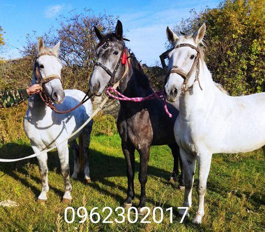 Продаю робочі коні