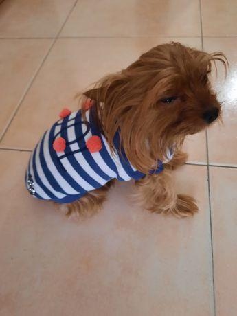 Várias Camisolas para cão