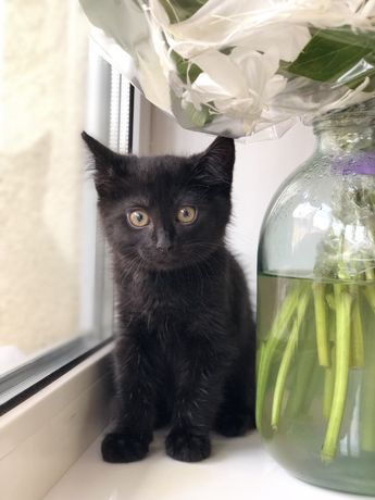 Помогите котенку найти дом