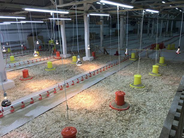 Ферма по выращиванию бройлера