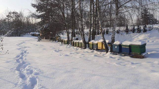 Odkłady pszczele sprzedam