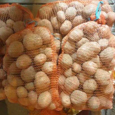 Ziemniaki sadzeniaki Bellarosa i Gwiazda