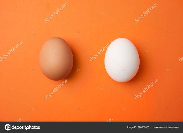 Инкубационное яйцо бройллер Кобб иРосс