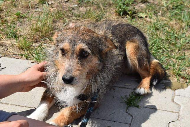 Kochany smutny pies szuka domku