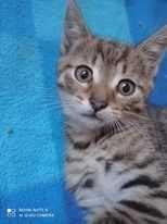 Oddam dwa małe koty w DOBRE RĘCE!