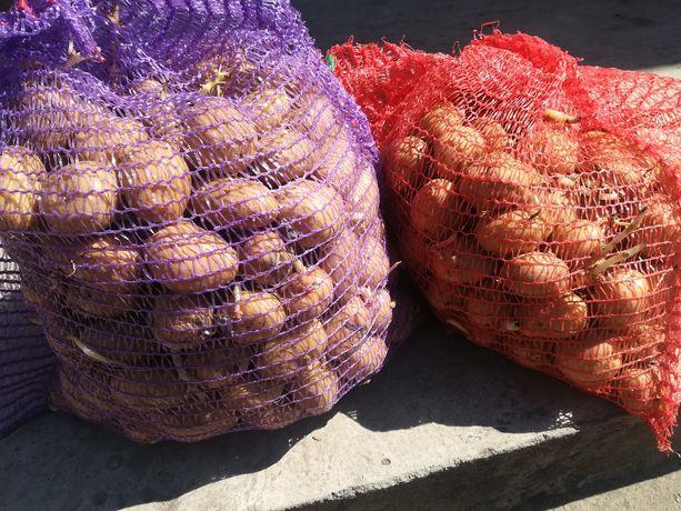 Продам картошку (насіння)