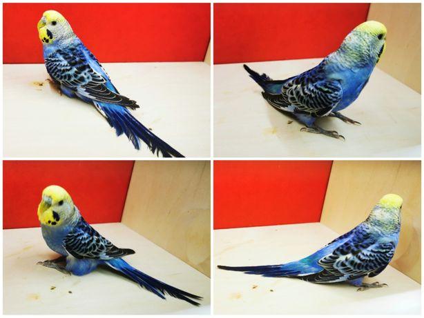 Papugi faliste i 2021 r.