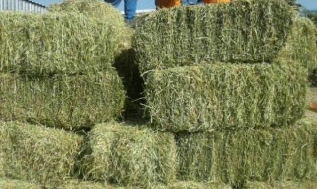 Люцерна Обмен на сельхоз-животных