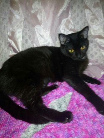 Черненькой кошечке Асе очень срочно нужен дом!8 мес.,стерилиз,вакцинир