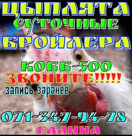 Бройлеры Кобб 500 Запись на 25 сентября. 8 и 24 октября.