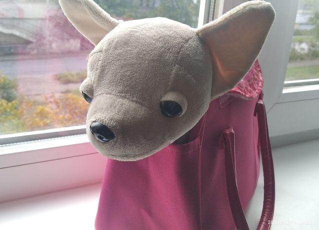 Собачка в сумочке CHI CHI LOVEЧихуахуа