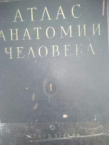 Атлас анатомии человка синельникова 1 том