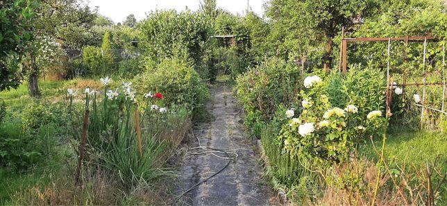 Ogródek działkowy ROD Katowice Brynów