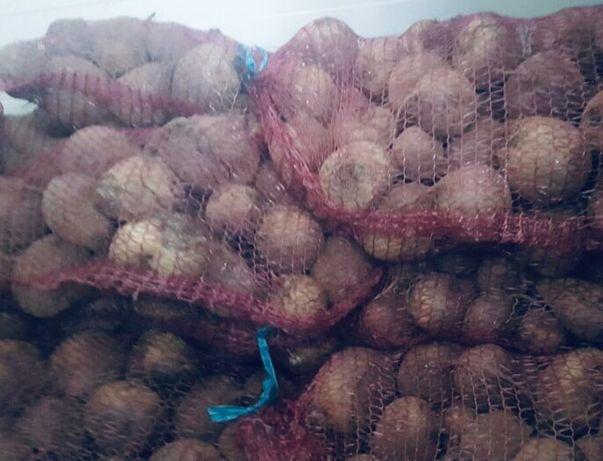 Warzywa marchew cebula ziemniaki buraki