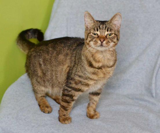 Ласковая, милая и очень домашняя Кошка Шалфея (1,5года, стерилизована)